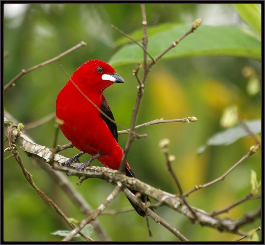 Luis A Florit Photo Gallery Aves Birds Rio De Janeiro Rj