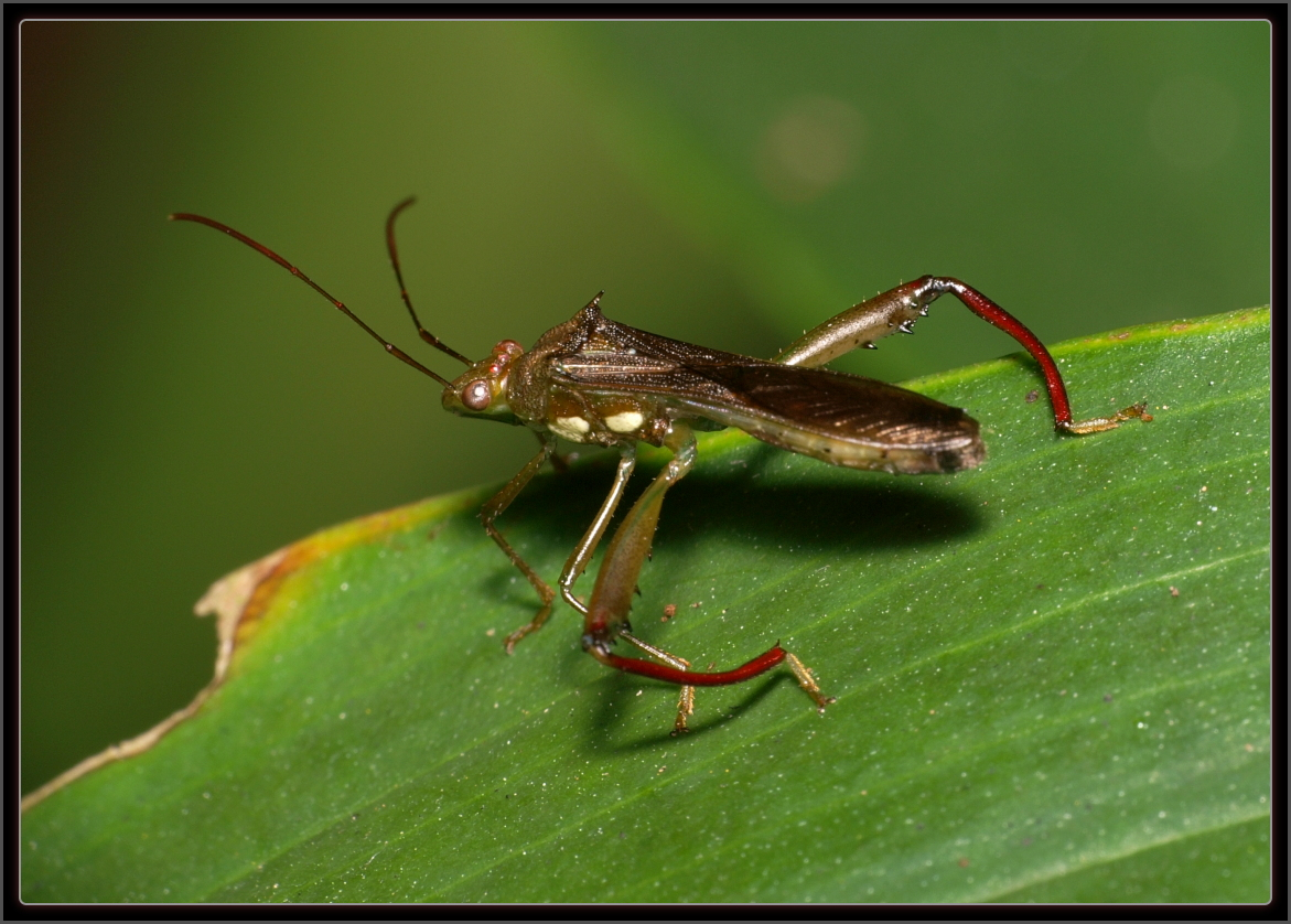 Luis A. Florit Photo Gallery: Macrophotography Caterpillar