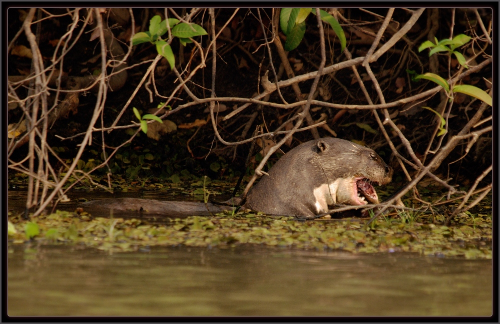 Luis A. Florit Photo Gallery: A vida selvagem do Pantanal ...